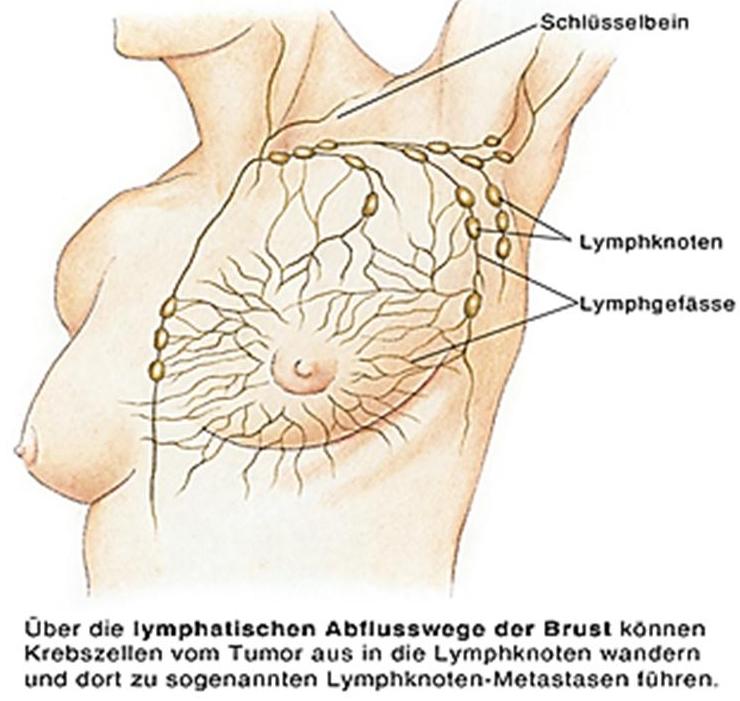 Beste Anatomie Der Halslymphknoten Zeitgenössisch - Menschliche ...